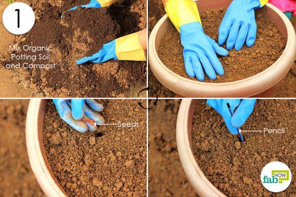 plant radish seeds