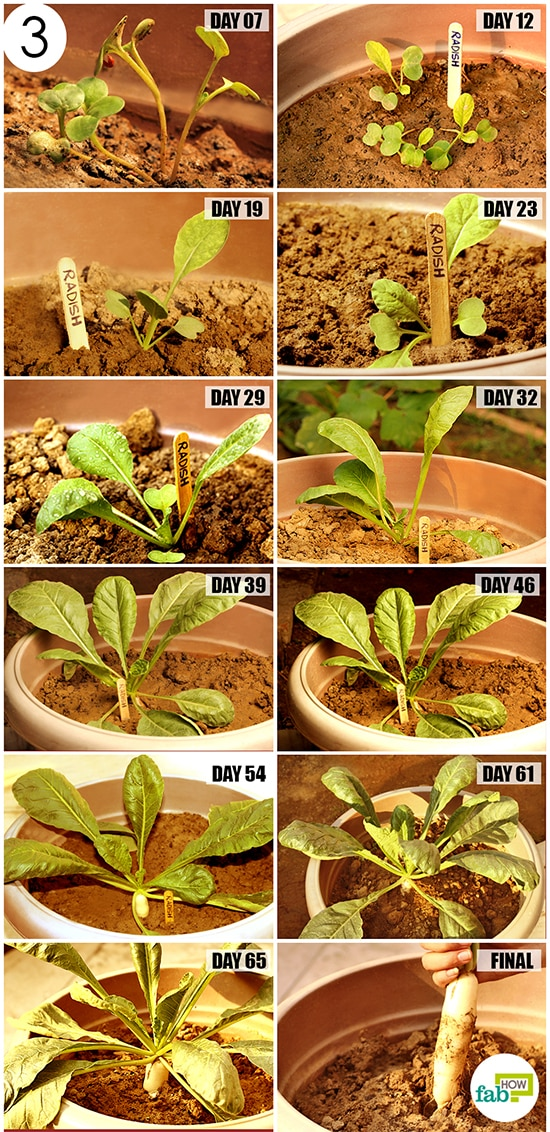 monitor plant growth