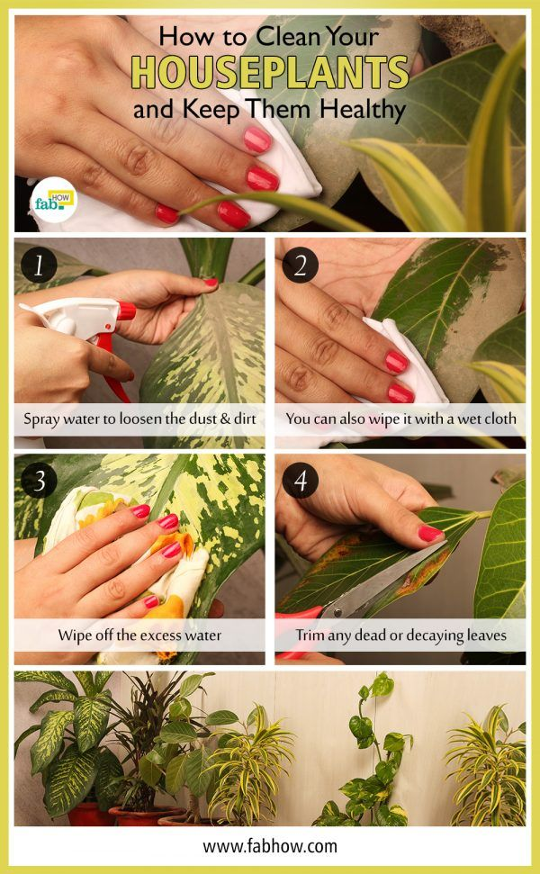 how-to-clean-your-houseplants-and-keep-them-healthy