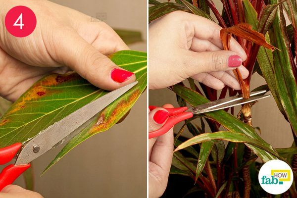 trim the decaying leaves