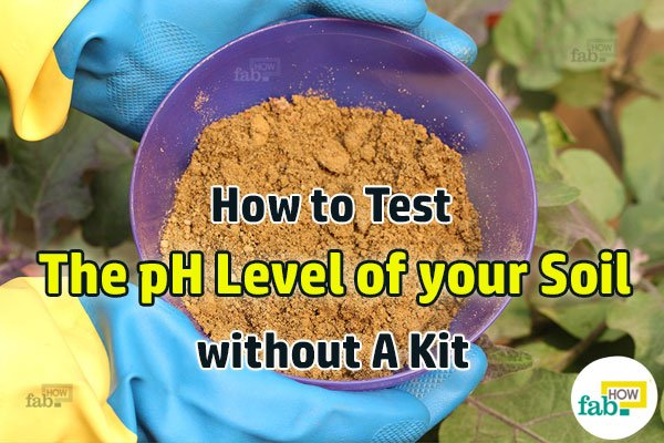 featured soil ph level
