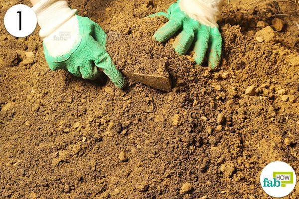 prepare soil for bitter gourd