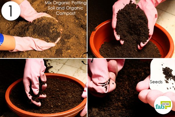 prepare soil and add seeds