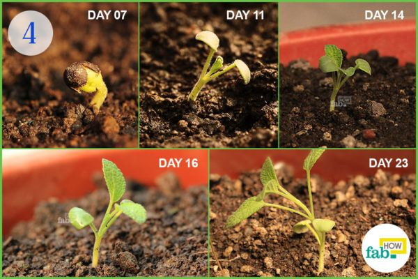 Observe the development of seeds