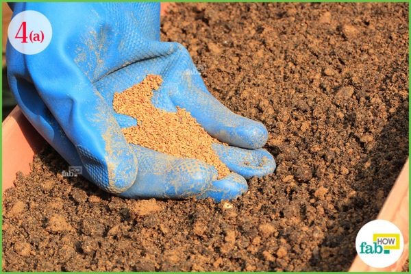 put seeds into the soil