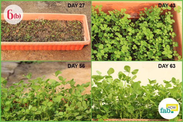 monitor the development of plant