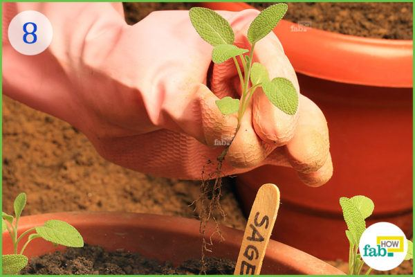 Extract the seedling from the planter