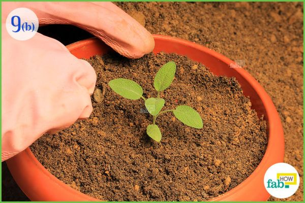 Gently plant the seedling