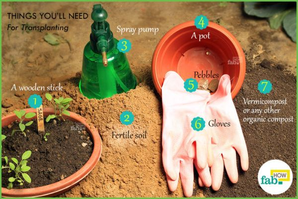 Things need for transplanting