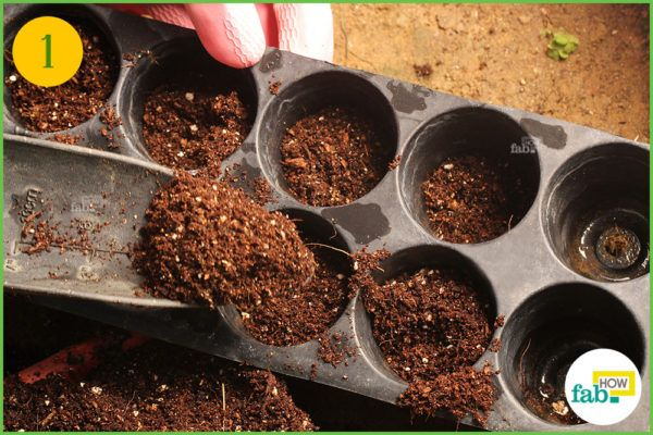 Fill the germination tray with potting mix