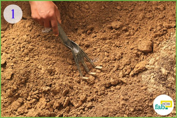 rake the surface of the seedbed