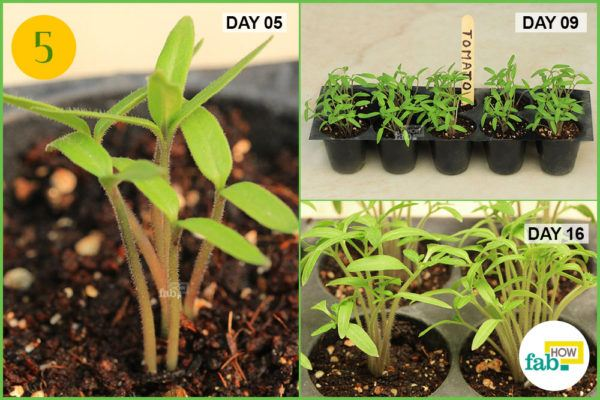 Monitor the germination process and seedling growth