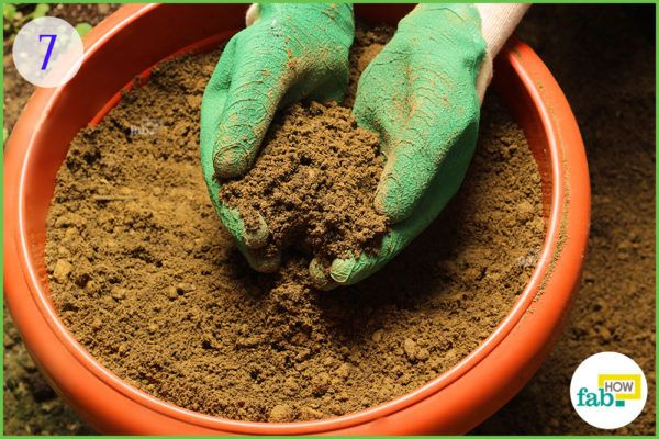 fill the pot with the prepared soil