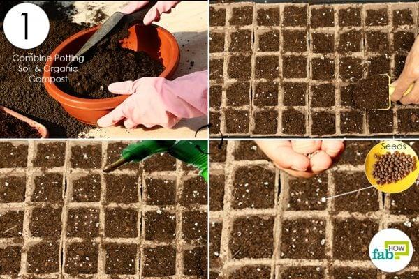 broccoli seed germination