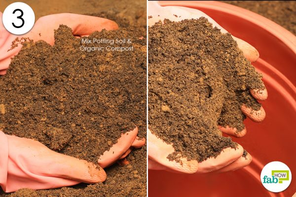 fill soil in pot