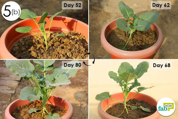 check plant growth