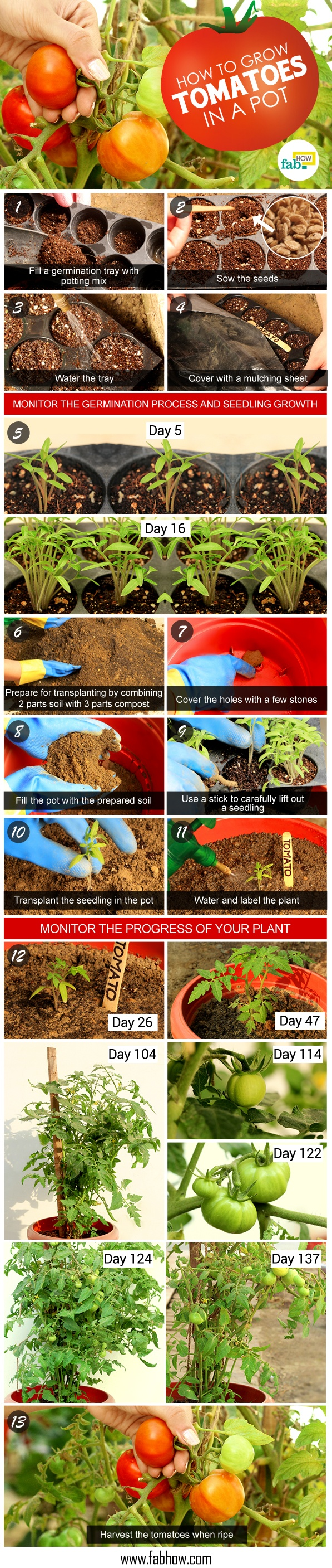 Grow tomatoes-in a pot inforgraphic
