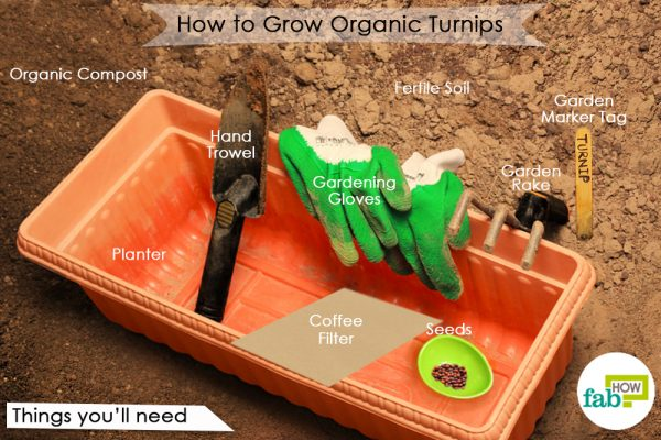 grow turnips