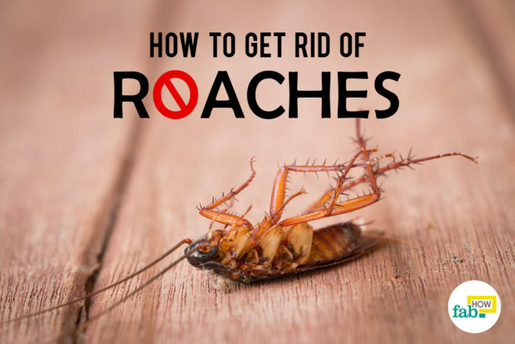 How to Get Rid of Roaches Fast Without an Exterminator