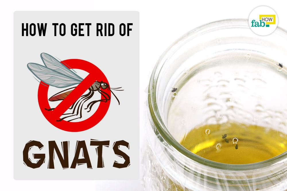 How To Make Homemade Traps To Instantly Get Rid Of Gnats ...