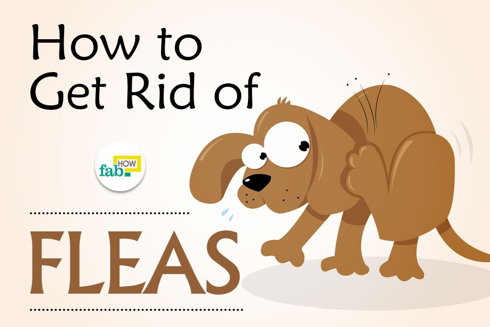 how to get rid of fleas on dogs top 5 home remedies fab how. Black Bedroom Furniture Sets. Home Design Ideas