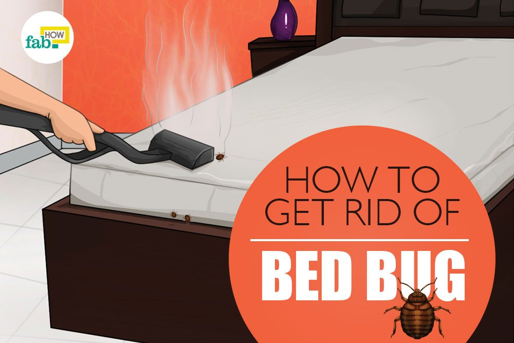 How To Get Rid Of Bed Bugs Fast And Permanently Make Your Own Spray
