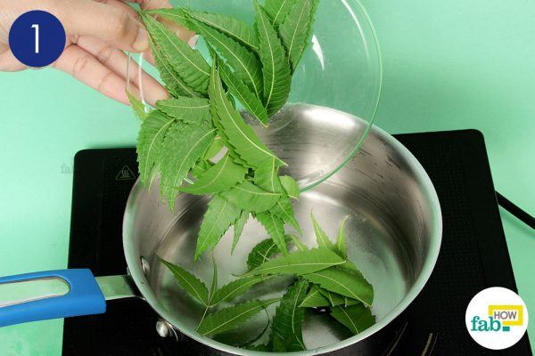 step-1-boil-a-few-leaves-in-water