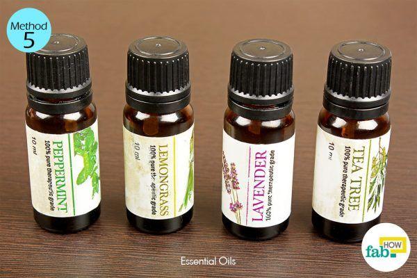 essential oil spray to kill ants