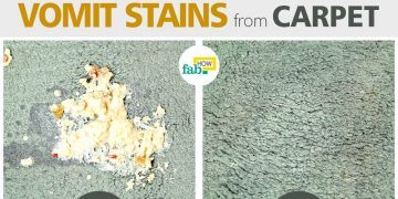 clean carpet off vomit stain