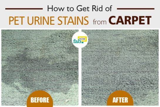 get pet urine stains out of carpet