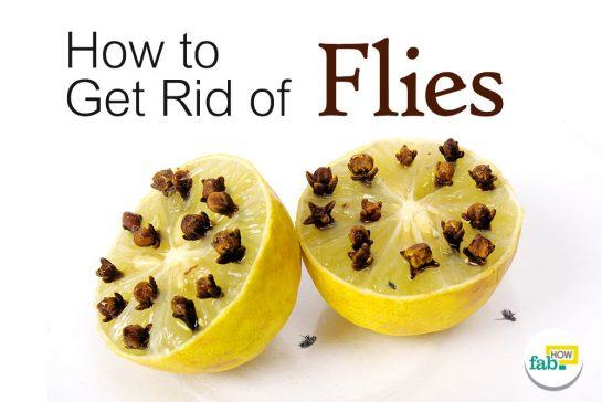 get rid of flies