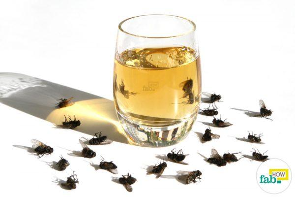 get rid of houseflies