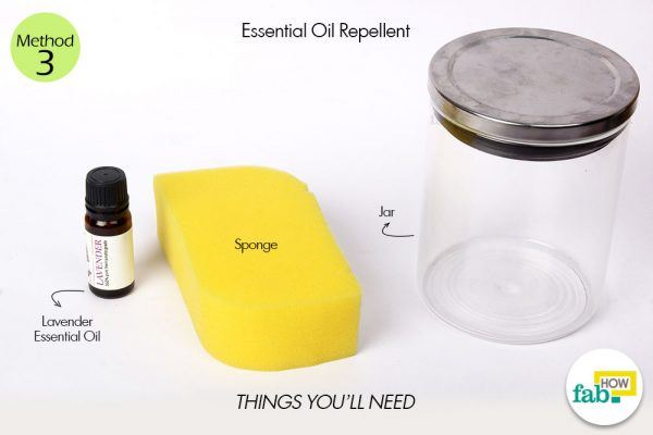 essential oil repellent things need