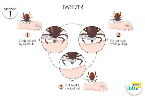 remove tick with tweezers