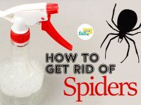 get rid of spiders