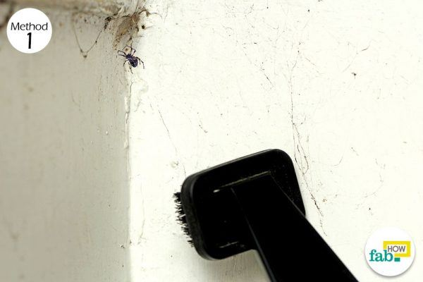 use cleaning tactics to get rid of spiders
