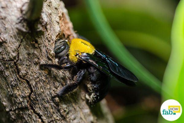 intro get rid of carpenter bees