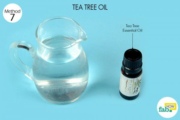 tea tree oil for yeast infection things need