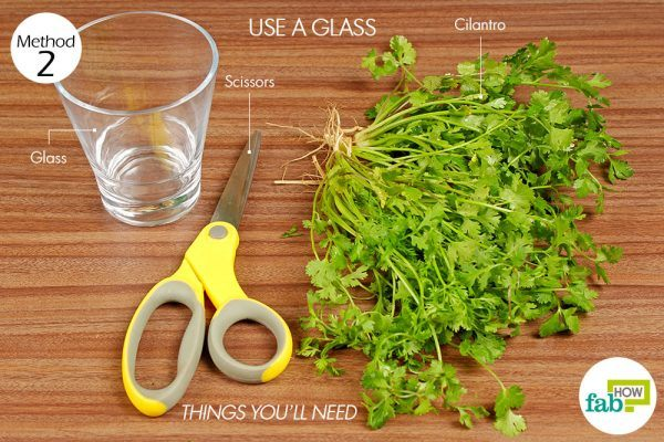 things you'll need to chop cilantro using a glass