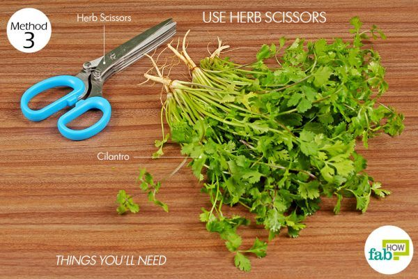 things you'll need to chop cilantro using herb scissors