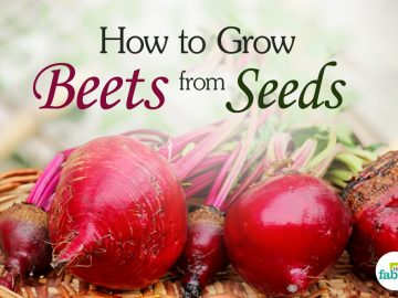 feat grow beets from seeds