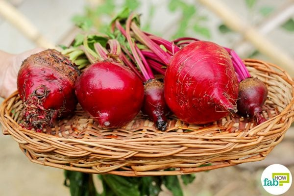 grow beets from seeds