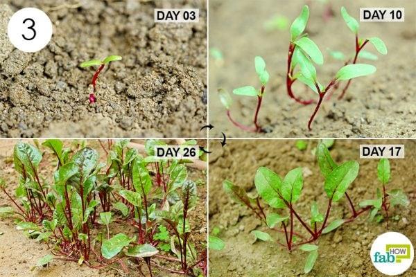 care for seedlings