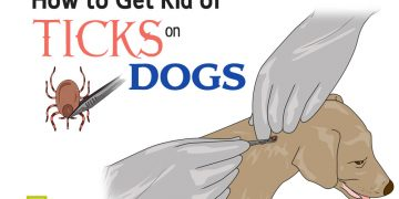 feat get rid of ticks on dogs