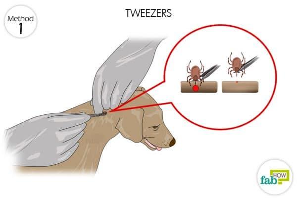 use tweezers to get rid of ticks