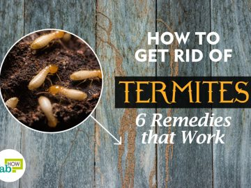 feat how to get rid of termites