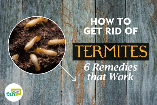 How To Remove A Tick From A Dog Fab How