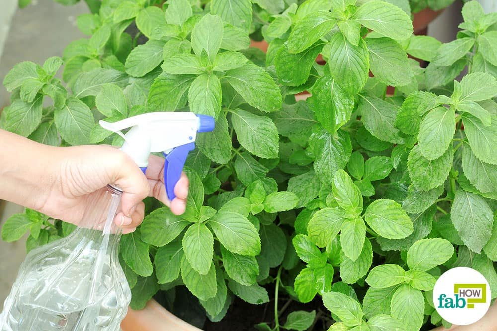 how to use epsom salt in garden for improving plant growth