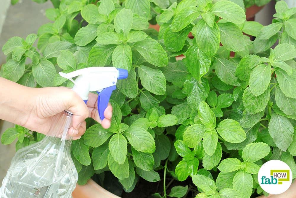 Using Epsom Salt In The Garden Garden Ideas