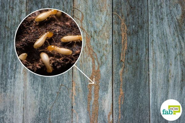intro how to get rid of termites